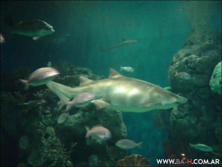Temaiken acuario tiburones y peces