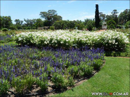El Rosedal de Palermo, jardines